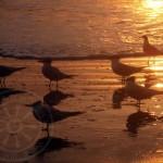birds-in-sun-rays46