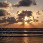 sunrise-earl-bird-133